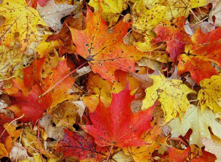 Spiegazione scientifica: ecco perché bisogna lasciare le foglie sul terreno!